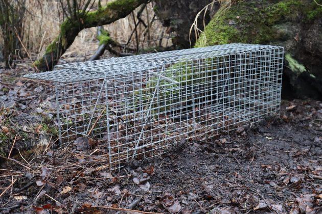 Suorakaiteen muotoinen, verkkopintainen loukku asetettuna metsään.