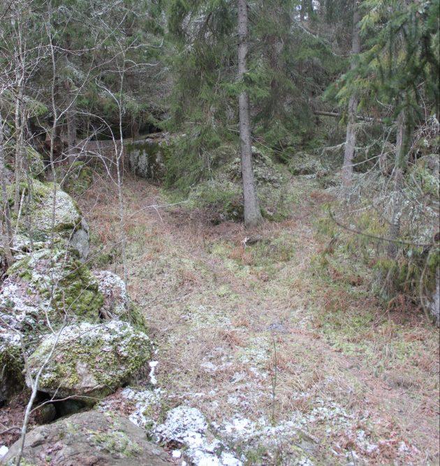 Metsä, jossa hennosti erottuu haaroittuva kapea polku.